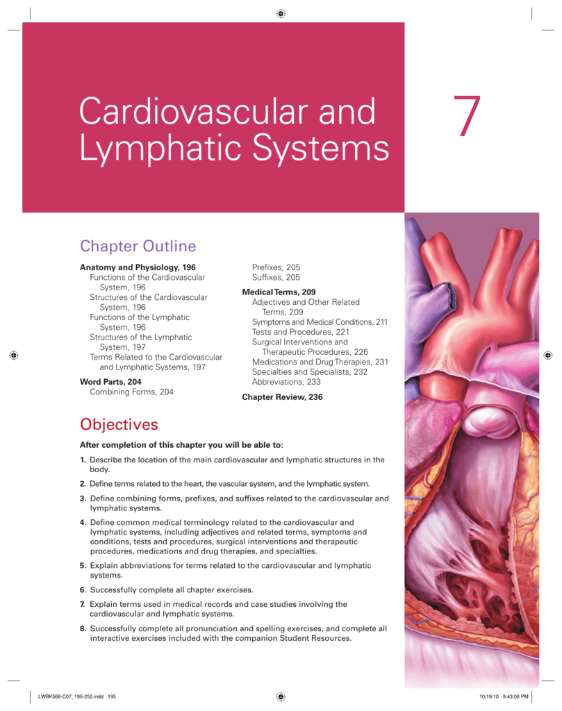Chapter 7 Cardiovascular And Lymphatic Systems