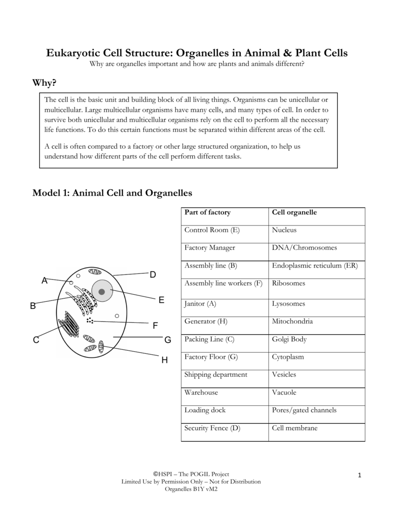 Eukaryotic Cell Structure: Organelles in Animal