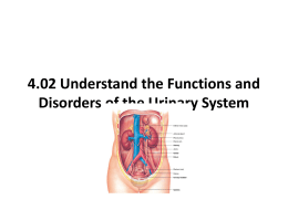 4.02 Understand the functions and disorders of the urinary system
