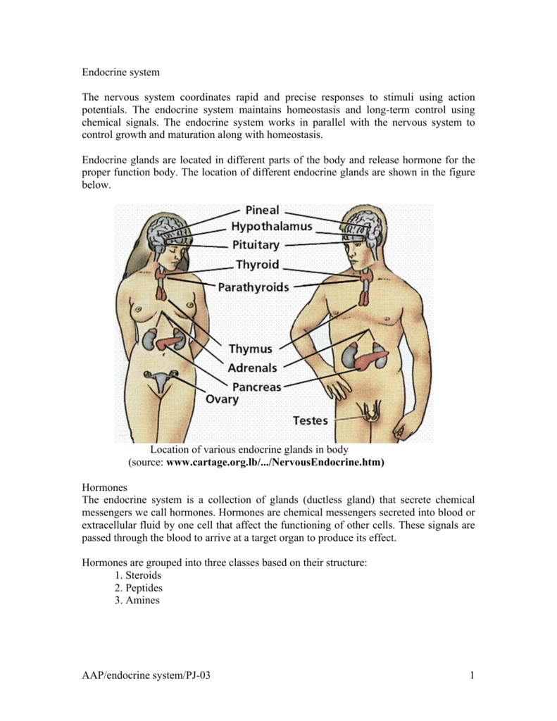 Aapendocrine Systempj 03 1 Endocrine System The Nervous