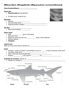Shark ppt notes
