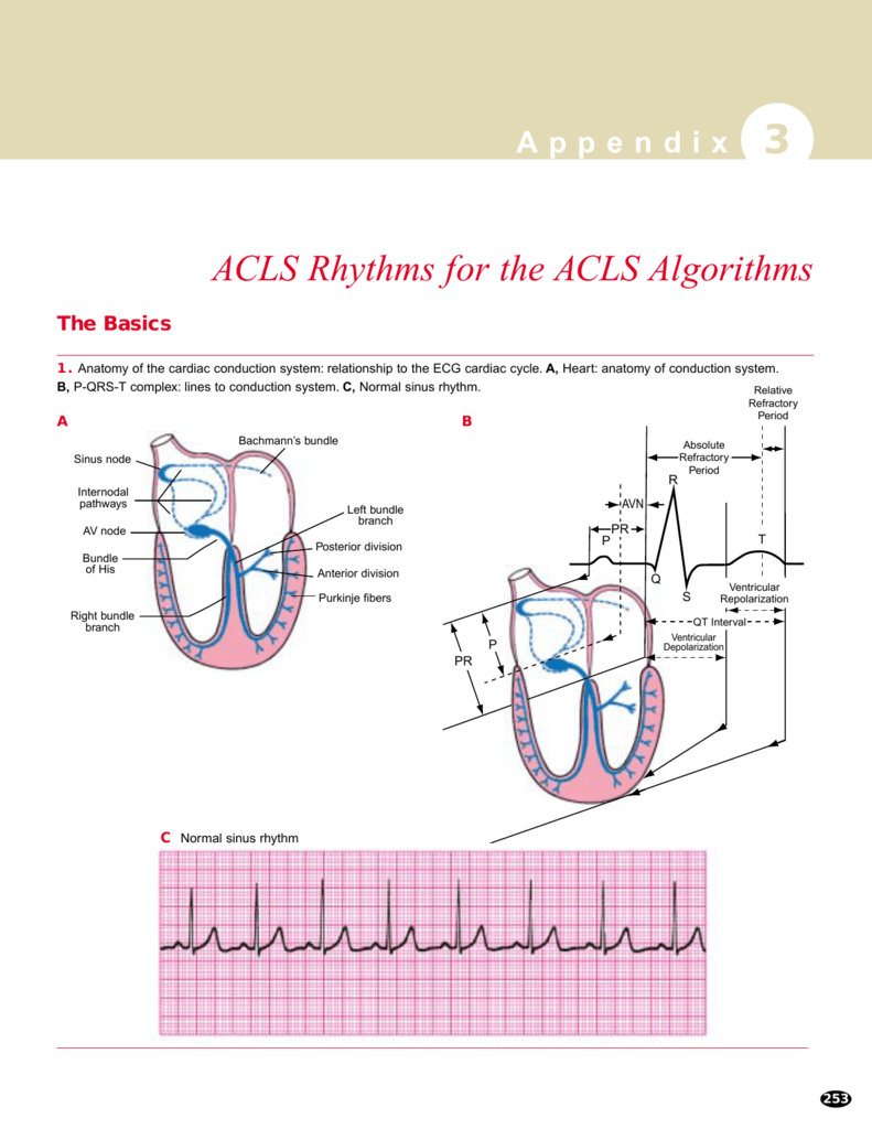 Acls flow chart image collections free any chart examples acls flow chart image collections free any chart examples acls flow chart images free any chart nvjuhfo Image collections