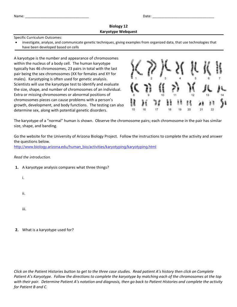 29. Karyotype Webquest