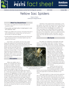 Yellow Sac Spiders - Utah State University Extension