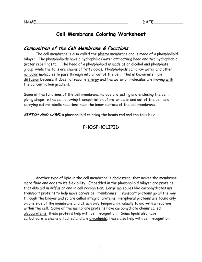 Cell Membrane Color Activity – Cell Membrane Coloring Worksheet