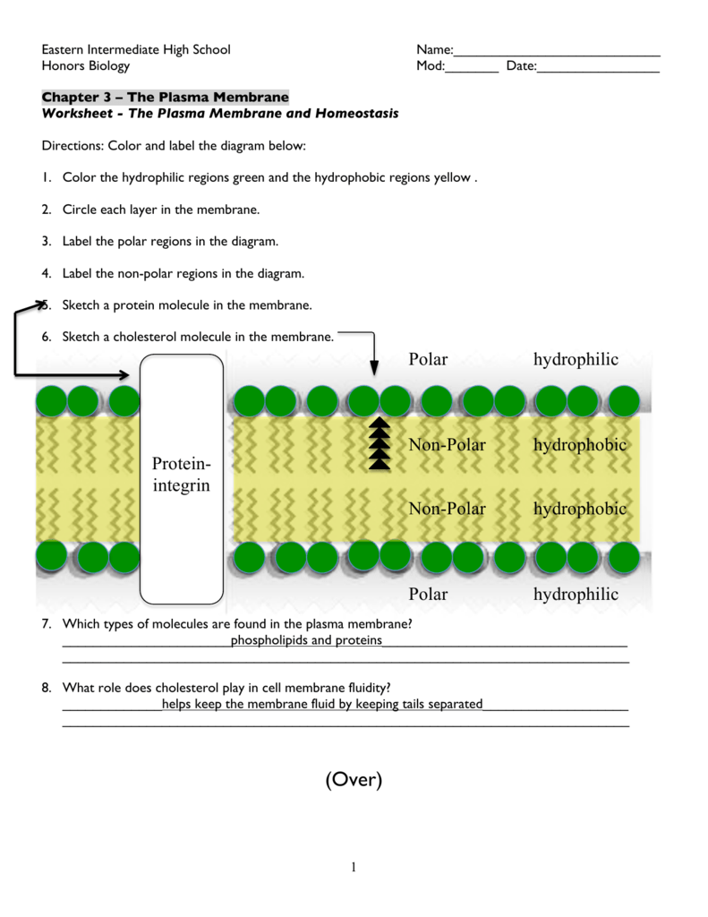 Worksheet - Diagram of the Plasma Membrane ANSWER KEY
