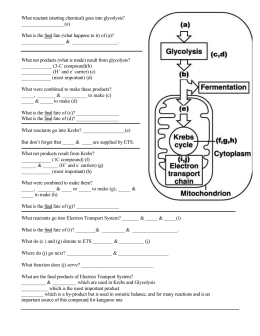 What reactant (starting chemical) goes into glycolysis? (a) What is