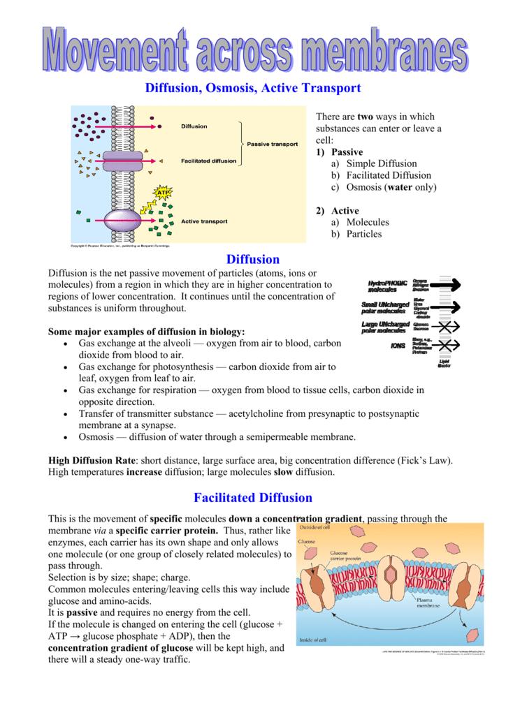 Facilitated diffusion worksheet answers