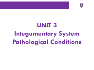 UNIT 3 Integumentary System Pathological Conditions