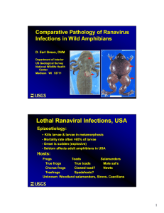 Comparative Pathology of Ranavirus Infections in Wild Amphibians