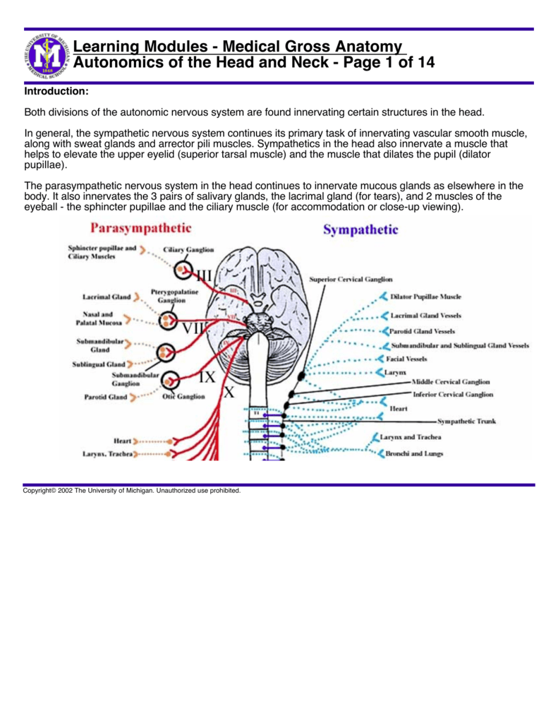Learning Modules Medical Gross Anatomy Autonomics Of The