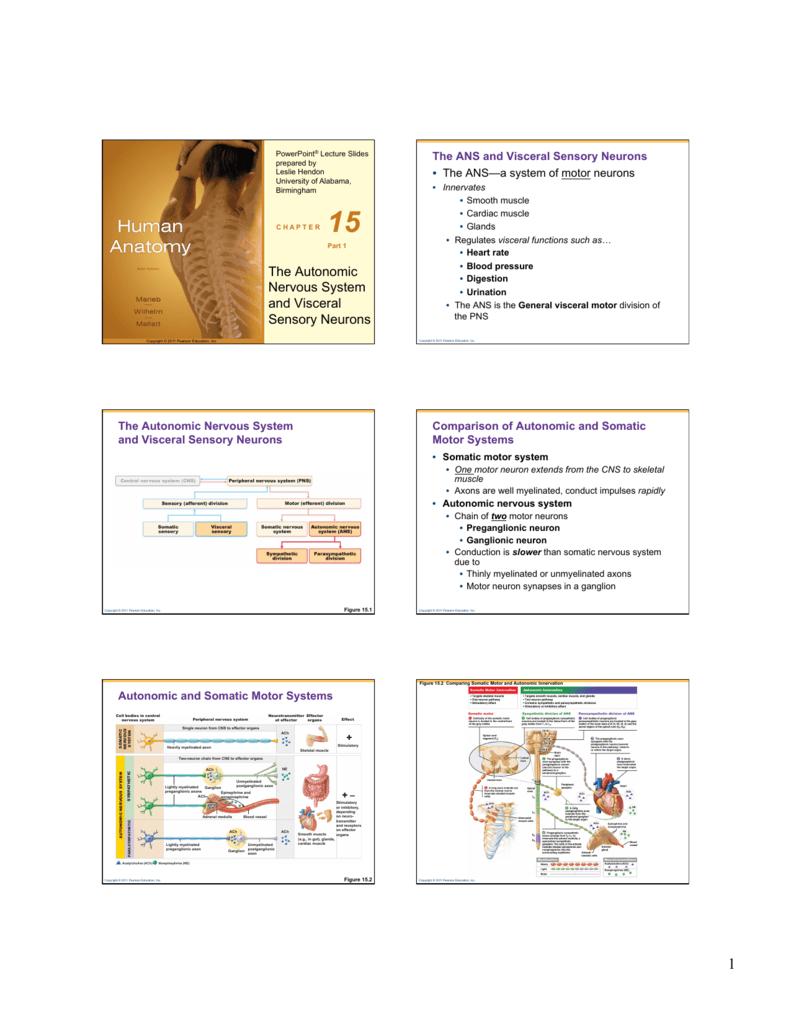 The Autonomic Nervous System And Visceral Sensory Neurons
