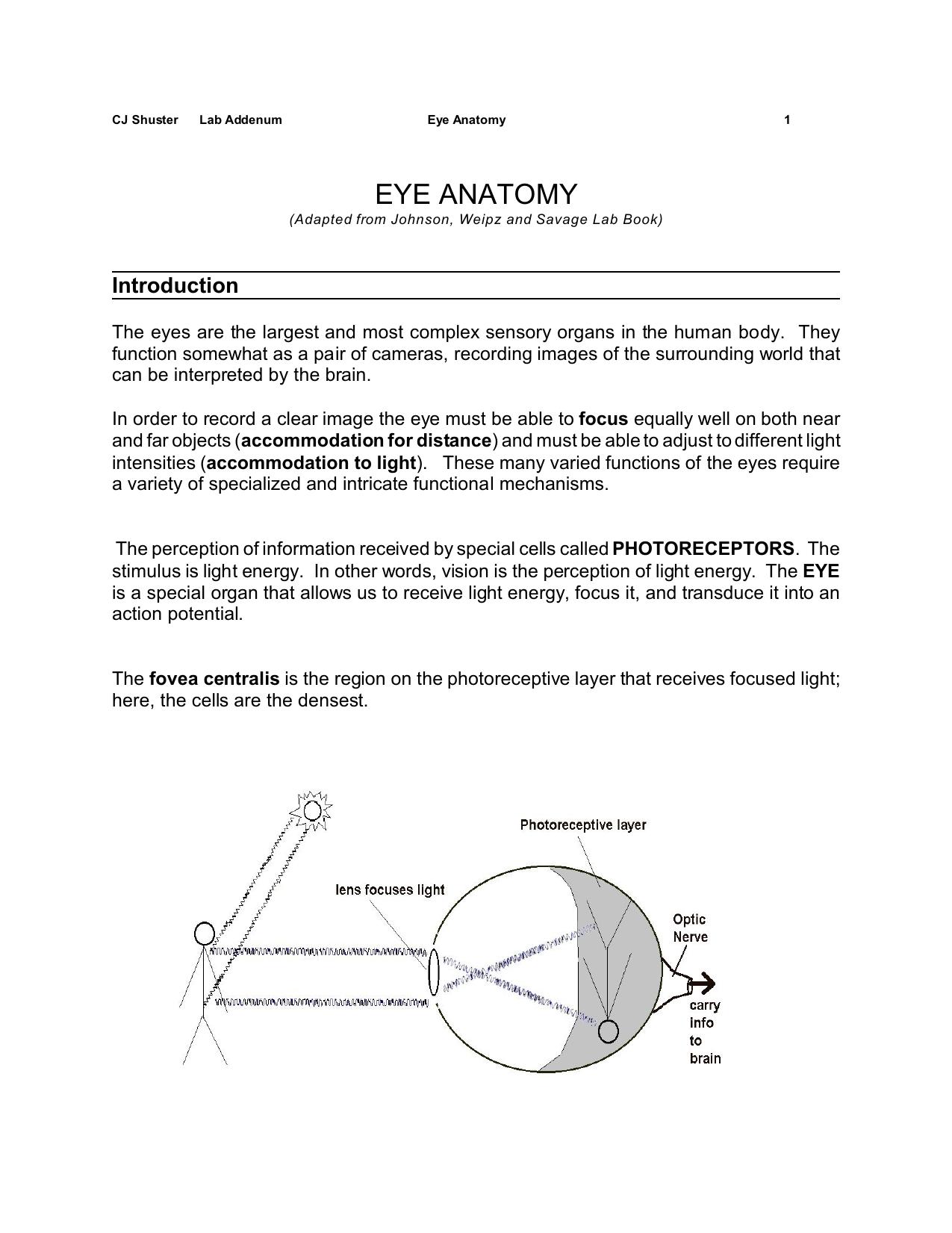 eye anatomy - Madison Area Technical College