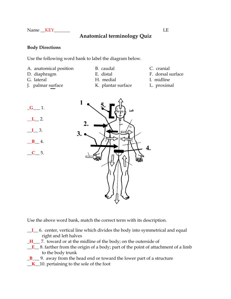 Anatomical terminology Quiz