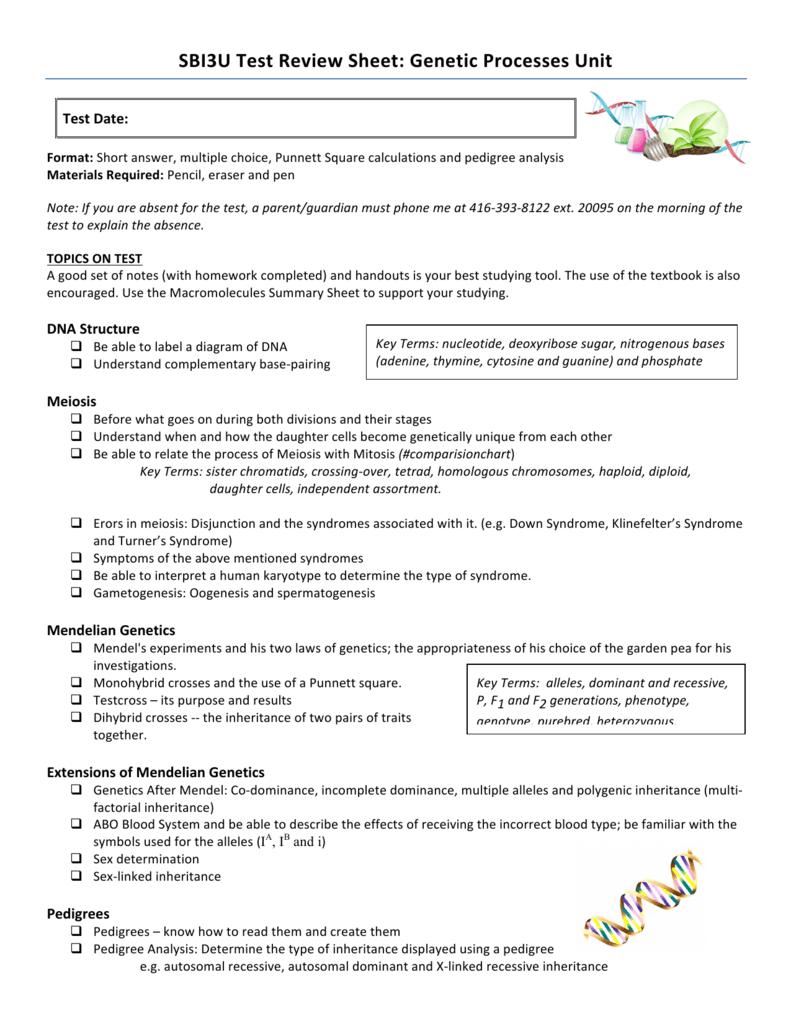 worksheet Meiosis Worksheet Multiple Choice Answers sbi 3u genetics test review sheet