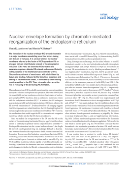 Nuclear envelope formation by chromatin