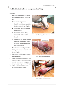 31. Electrical stimulation on leg muscle of frog