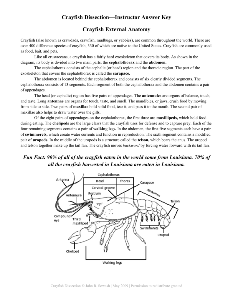 Crayfish Dissection—Instructor Answer Key Crayfish External Anatomy