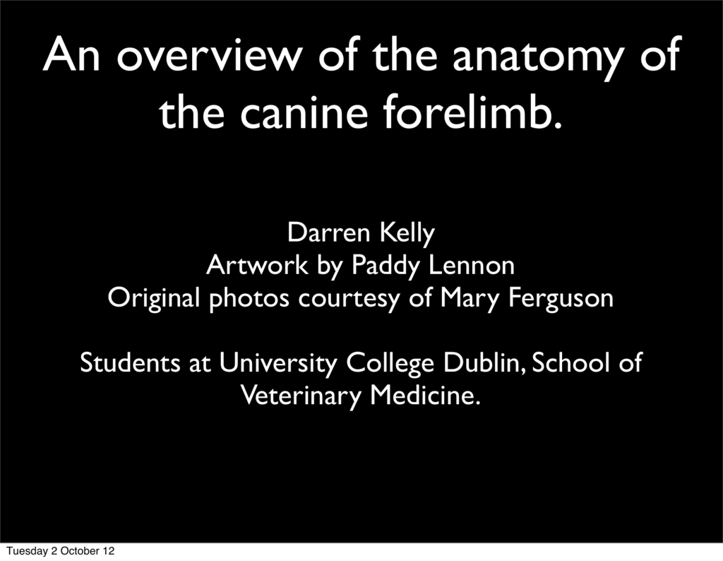An overview of the anatomy of the canine forelimb.