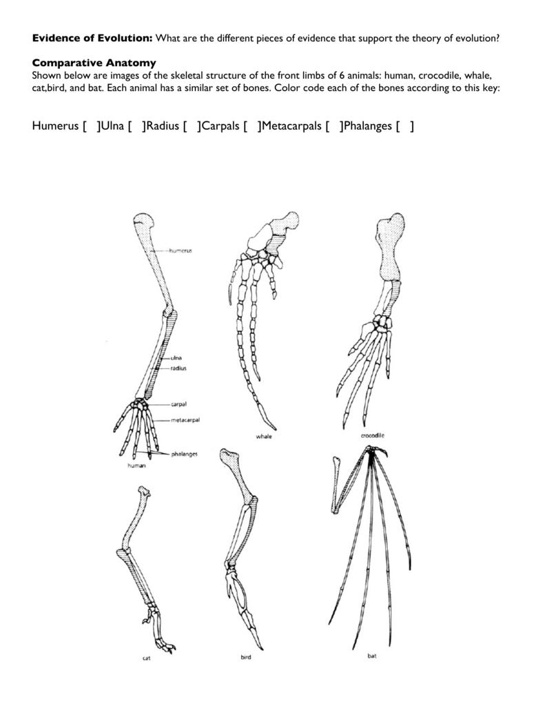 Humerus [ ]Ulna [ ]Radius [ ]Carpals [ ]Metacarpals