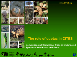 CITES_Chapter17-The role of Quotas-07-01-09