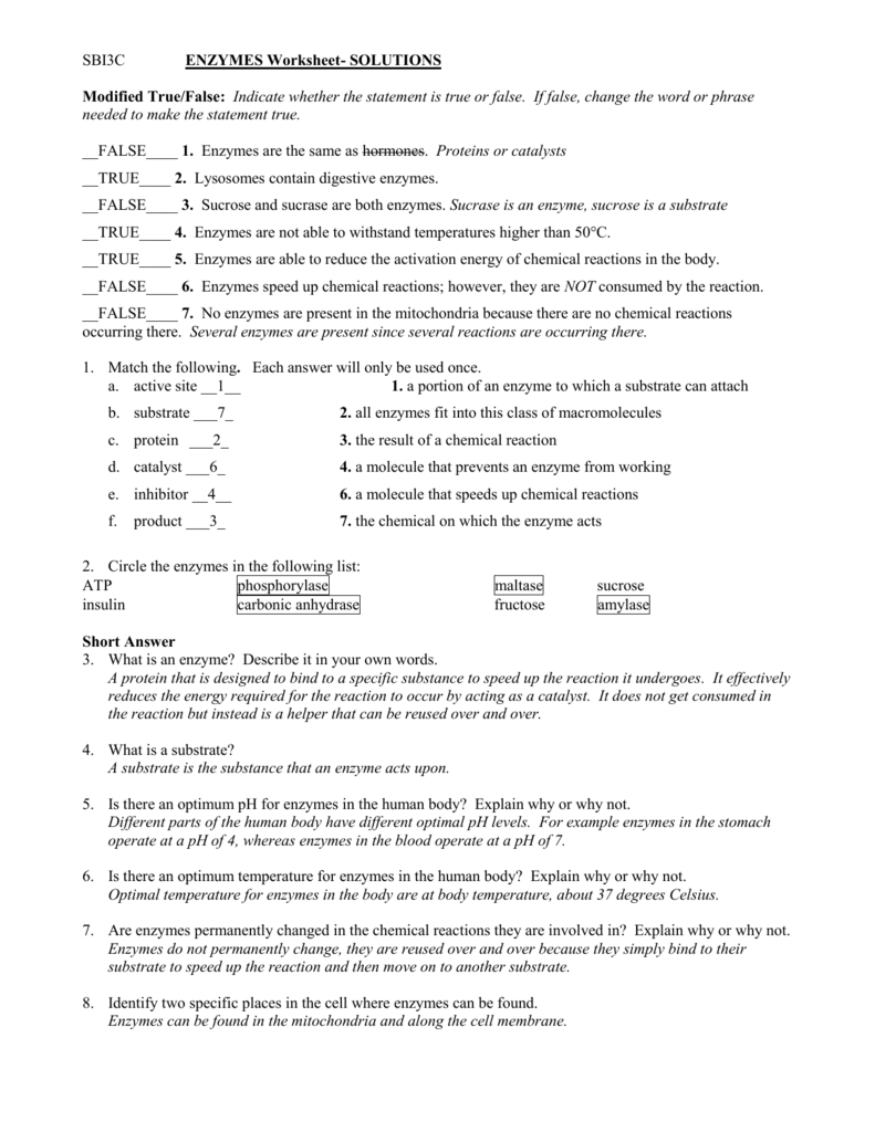 SBI3C ENZYMES Worksheet- SOLUTIONS Modified True/False
