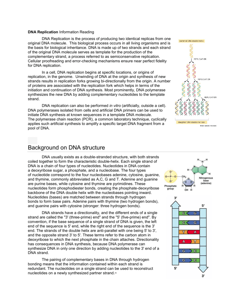 DNA Replication Worksheet and Reading