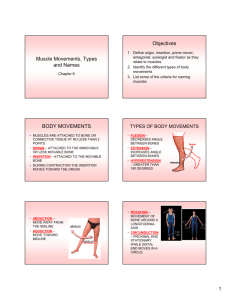 Muscle Movement, Types and Names
