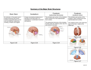 Summary of the Major Brain Structures Brain Stem Cerebellum