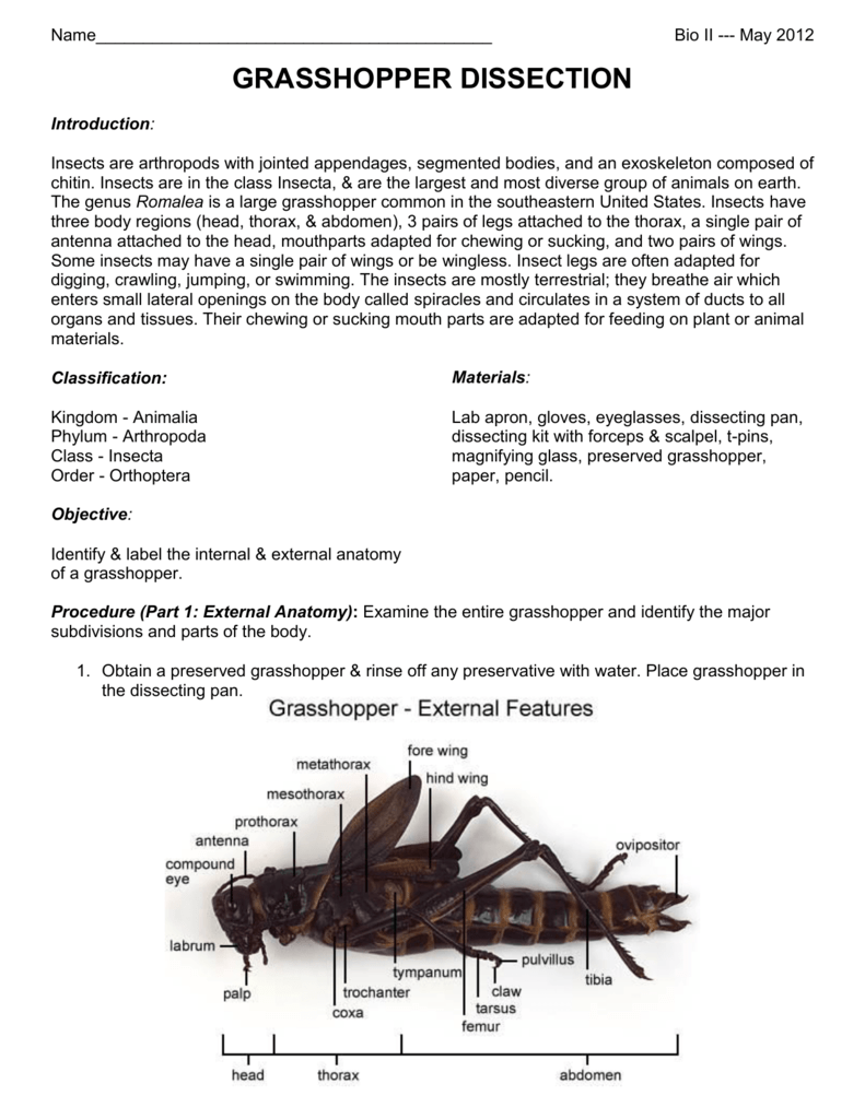Grasshopper Dissection Lab – Grasshopper Dissection Worksheet