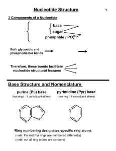Nucleotide Structure Base Structure and Nomenclature