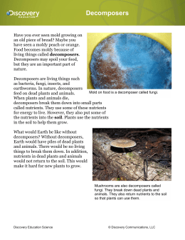 Decomposers Reading Passage