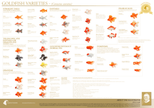 Goldfish Varieties Poster