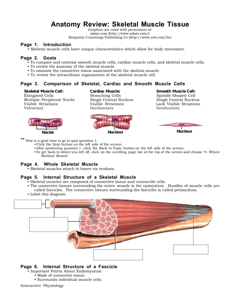 Anatomy Review Skeletal Muscle Tissue Answers Choice Image - human ...