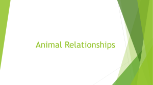 Animal Relationships Notes