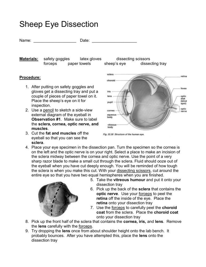 Eye Diagram Of A Sheep S - House Wiring Diagram Symbols •
