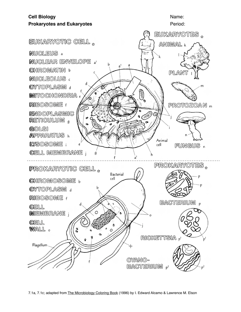 eukaryotic animal cell coloring pages - photo#12