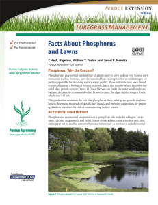 Facts About Phosphorus and Lawns