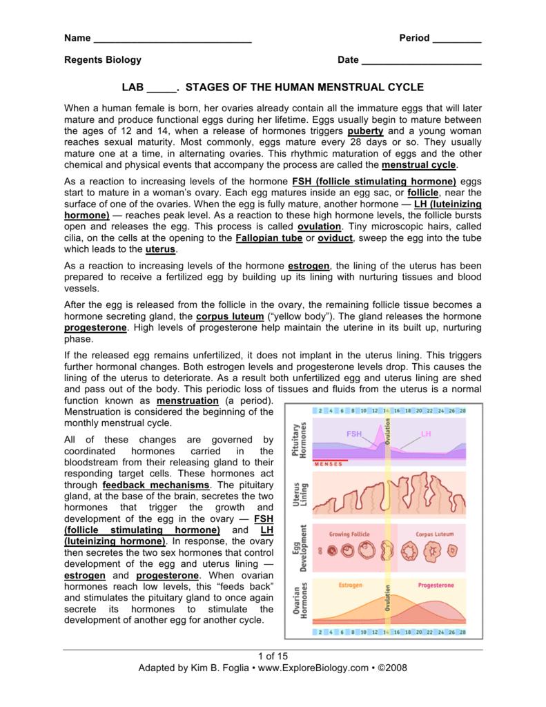 Workbooks regents biology worksheets : Menstrual Cycle - Explore Biology