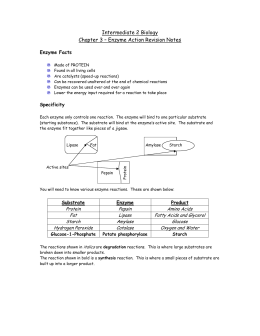 Intermediate 2 Biology Chapter 3 – Enzyme Action Revision Notes