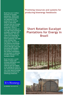 Short Rotation Eucalypt Plantations for Energy in Brazil. IEA