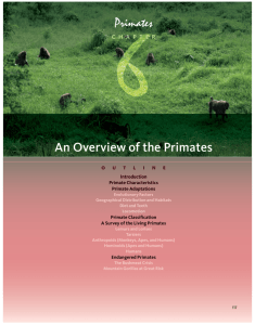 An Overview of the Primates - MSU Department of Anthropology