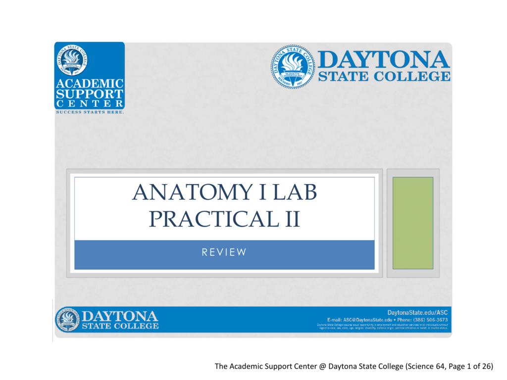 Anatomy I Lab Practical II