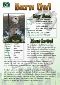 Barn Owl - animalparties.co.uk