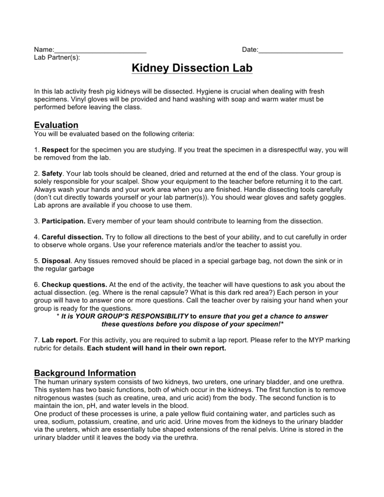 Kidney Dissection Lab