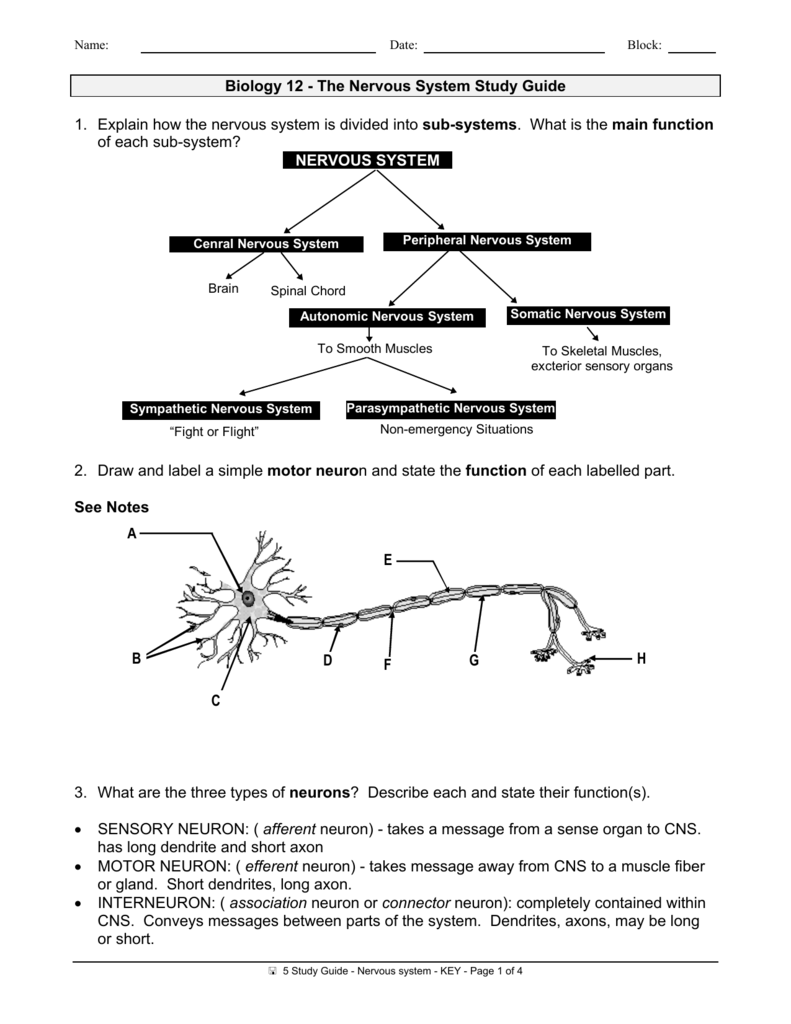 Biology 12 the nervous system study guide 1 explain how the ccuart Image collections