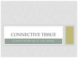 Connective Tissue - Solon City Schools