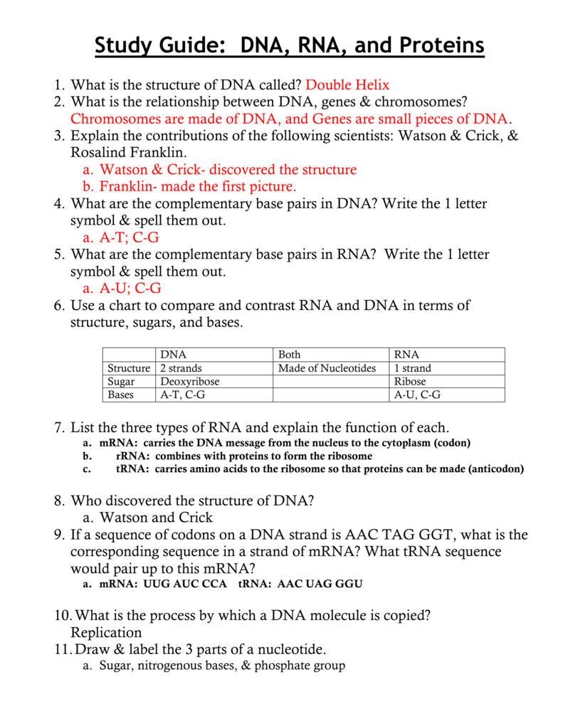 worksheet Dna Rna And Proteins Worksheet ch 11 study guide dna rna and proteins