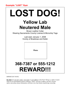 "Example ""LOST"" flyer"