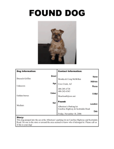found dog - National Brussels Griffon Rescue, Inc.
